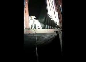 Veja o momento em que ativistas de ONG e a Guarda Municipal liberaram os animais no bairro Gargantilha, em Campinas