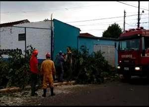Bombeiros registraram queda de duas árvores neste domingo (20) após ventos fortes na cidade