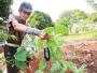 Morador da Lagoinha fez horta em terreno abandonado