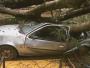 """""""Temos mais de 50 árvores com risco de cair"""", alerta vereador"""