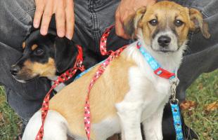 Divulgação - Sábado tem feirinha de adoção de animais no Parque Infantil