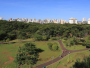 Lei autoriza entrada de cães e gatos em parques de Ribeirão