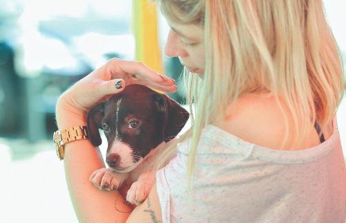Adoção responsável: 31ª edição da Feira Adote Pet será realizada no RibeirãoShopping, no primeiro sábado de outubro (foto: Mariana Martins / A Cidade - 13.dez.2016) - Foto: Mariana Martins / A Cidade