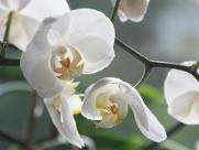 Abertura da 57ª Exposição Nacional de Orquídeas será nesta sexta-feira (26)