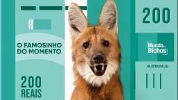 Lobo-guará é um animal ameaçado e solitário