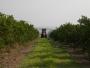 Estudo prova redução da mistura de água com defensivos nos pomares de citrus