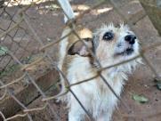 Lei que obriga prefeitura a publicar denúncias de maus-tratos contra animais é aprovada