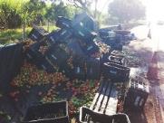 Caminhão perde roda, tomba e espalha legumes na Cândido Portinari