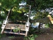 Caminhão se enrosca em galhos e árvore cai em caçamba