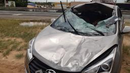 Carro atropela cavalo em rodovia e duas pessoas ficam feridas