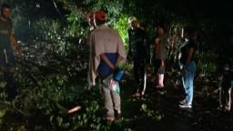 Temporal derruba árvore sobre moto e deixa um ferido