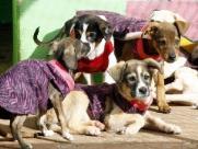 Animais abandonados que procuram um novo lar serão mascotes em jogo