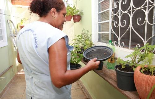 Divulgação - Agente de saúde procura foco de dengue