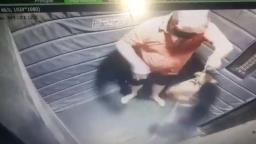 Cachorra é resgatada após apanhar 39 vezes em elevador em Americana