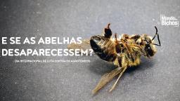 Agrotóxicos: o vilão das abelhas