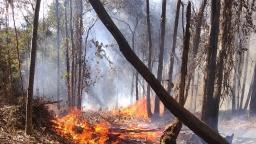 Incêndio atinge mata no Circuito das Montanhas em Águas