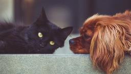 Águas de Lindoia volta a vacinar cães e gatos neste sábado