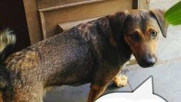 Ribeirão: Família da Vila Virgínia procura a cachorra Amarula