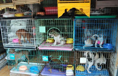 ACidade ON - São Carlos - Animais em jaulas no Pet Shop (Foto Ilustrativa)