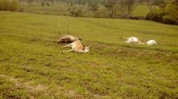 Bois morrem eletrocutados em terreno de Barão Geraldo