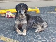 Força-tarefa salva cachorro após post de paciente oncológica