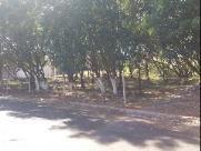 Direto do Zap: Cansados de esperar, moradores limpam e conservam reserva no Parque Gramado