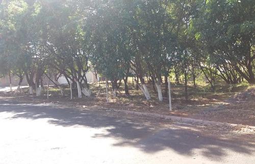 Área foi limpa, cercada e árvores tiveram troncos pintados - Foto: ACidade ON - Araraquara
