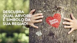 Dia nacional da árvore
