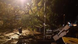 Temporal derruba 35 árvores e vento chega a 97,5 km/h