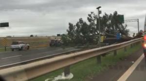 Árvore bloqueia duas faixas da Rodovia D. Pedro em Campinas