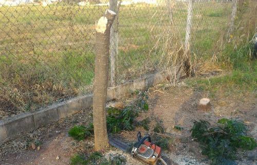 Foto do leitor/Rita de Cassia Silva de Oliveira - Árvore cortada no Parque Industrial na tarde desta quinta (26). (Foto: Foto do leitor/Rita de Cassia Silva de Oliveira)