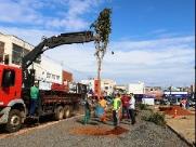 Prefeitura planta 10 árvores na Praça do Mercado Municipal
