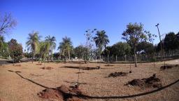 Compensação: Árvores são plantadas no Parque Maurílio Biagi