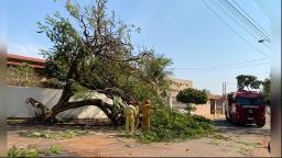 Queda de árvore de grande porte causa bloqueio na zona Oeste
