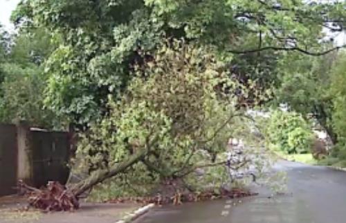 Chico Escolano / EPTV - Árvore foi arrancada pela raiz durante vendaval em Ribeirão Preto