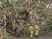 Após queda de árvore, trânsito é liberado na avenida Portugal