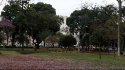 Dia da Árvore: Campinas tem meta de plantar 10 mil mudas por mês