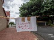 Homem alérgico a abelhas é atacado por enxame em Ribeirão Preto