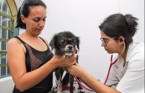 Amanda Rocha - Atendimento veterinário gratuito em Araraquara (Foto: Amanda Rocha)