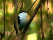 Mapeamento identifica animais e busca conservação de espécies em Araraquara