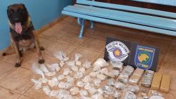 Cão Hector encontra tambores enterrados com drogas na região