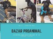 Grupo ProAnimal realiza bazar para ajudar animais abandonados