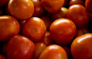 Divulgação/EBC - Tomates