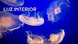 O show da bioluminescência