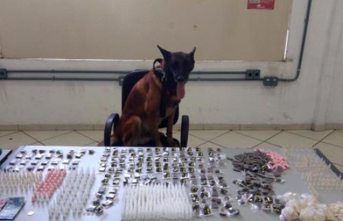 Polícia Militar/Divulgação - Bolt e o resultado do seu trabalho: combate ao tráfico de drogas. Créditos: Polícia Militar/Divulgação