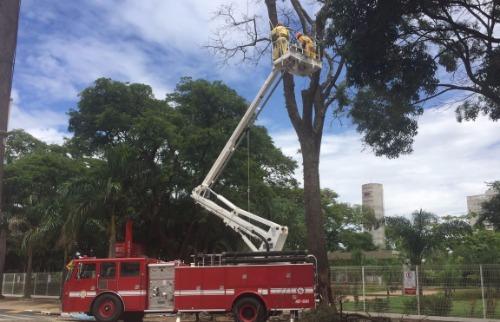 Da reportagem - Bombeiros fazem operação para retirar Angico centenário em frente a escola Sesi