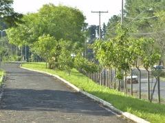 Bosque passou por limpeza e teve reforço na segurança (Tetê Viviani/Assessoria de Imprensa da Prefeitura) - Foto: ACidade ON - Araraquara