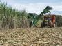 Região de Araraquara aboliu queimadas e usinas já tem quase 100% da colheita mecanizada