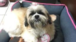 Família busca cachorrinha desaparecida no Nova Campinas