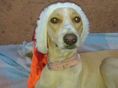 Cachorra Mel desapareceu na Alameda Paulista. (Arquivo pessoal) - Foto: ACidade ON - Araraquara